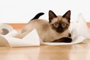 Понос у кошки. Что делать?