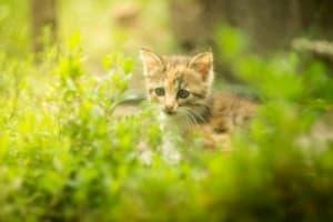 Продолжительность жизни кошек