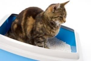 Что делать, если у кошки запор