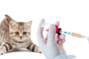 Какие прививки и в каком возрасте делают котятам