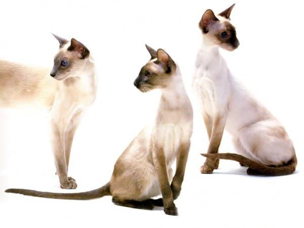 Три красавца