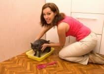 Как приучить котенка к туалету (лотку)