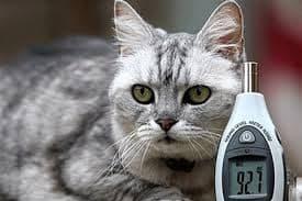 Самая громкая кошка в мире