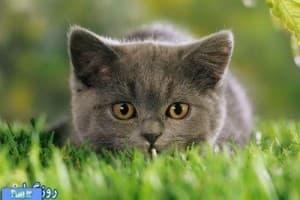 Способности кошек