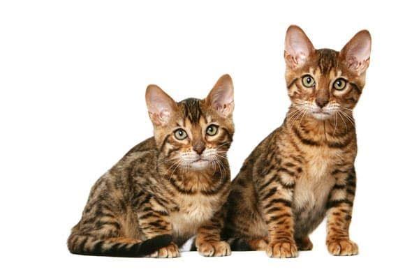 Ути какие котята