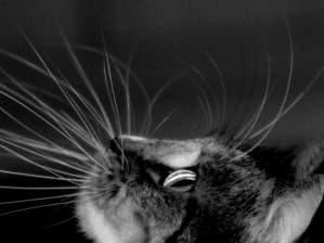 Кошка с усами