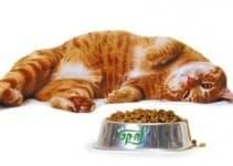 Каким кормом лучше кормить кошку. Какой корм для кошек лучше