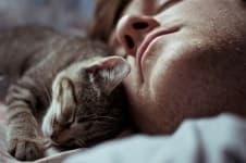 Почему кошки топчут лапками
