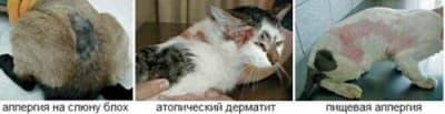 Виды аллергии у кошек