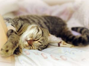 У кошки воняет изо рта