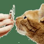 Лечение астмы у кошек