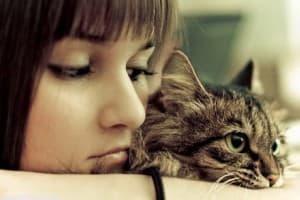 Лейкоз у кошек: симптомы, лечение