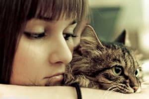 Лейкоз у кошек симптомы, лечение