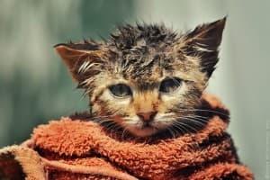 Как мыть котенка