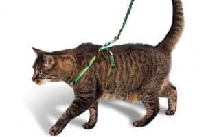 Шлейка для кошек: учимся пользоваться