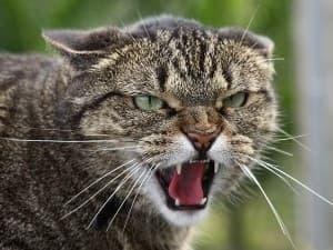 Инфекции после кошачьих укусов