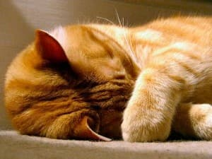 Пониженная температура у кошки