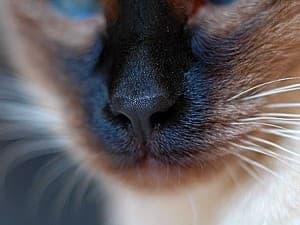 Нос у кота