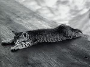 Причины запора у кошек