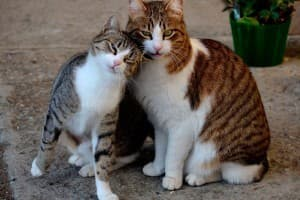 Кто лучше: кот или кошка?