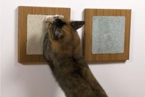Как отучить кота драть обои