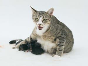Процесс родов у кошки