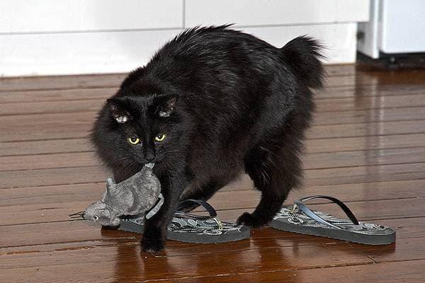 Играется с мышью