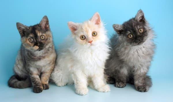Обаятельные котята