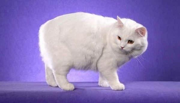 белая красавица
