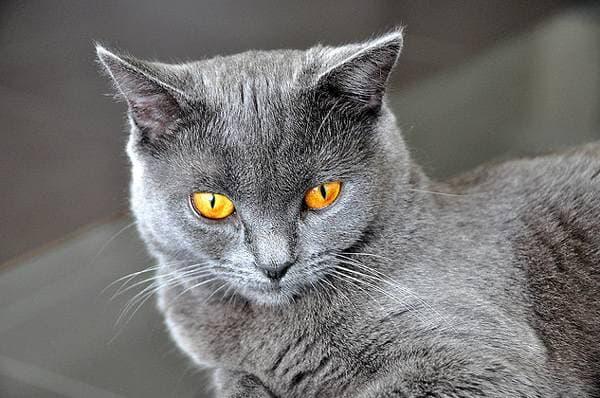 Огненные глаза