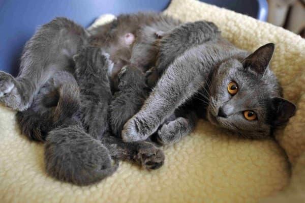 с котятами