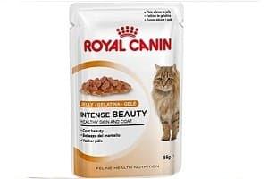Корм для кошек Royal Canin: обзор, отзывы и цены