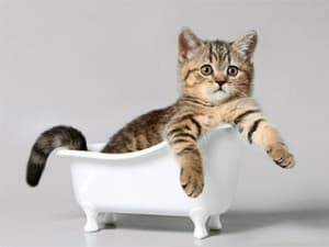 Гипоаллергенные кошки: породы с фото