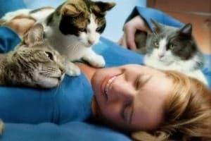 самые ласковые породы кошек