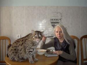 можно ли содержать кота-рыболова у себя дома