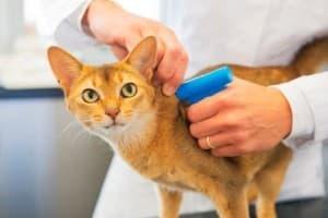 Чипирование кошек