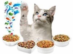 Готовый корм для кошки после стерилизации