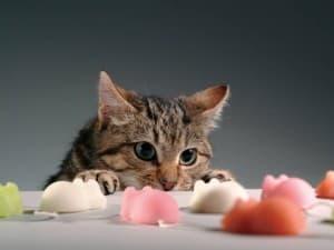 Диета для кошек при болезнях печени