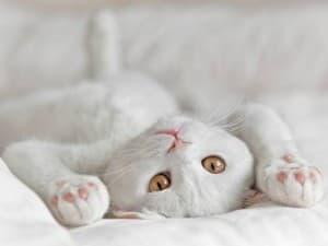 Зачем чистить уши кошке