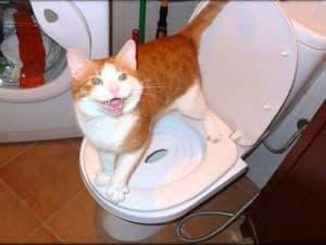 Побочные эффекты после вазелинового масла у кошек