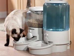 Какие автоматические кормушки бывают для кошек