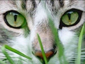 Какие витамины лучше для кошки