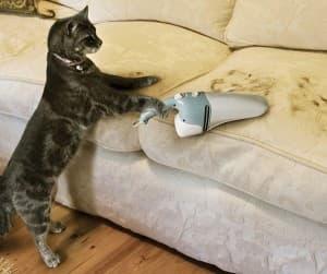 Сколько времени линяет кошка