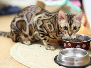 Кошка кушает