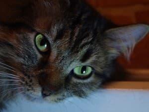 Агрессия кошки мне плохо