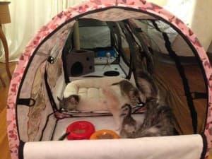 арочная палатка
