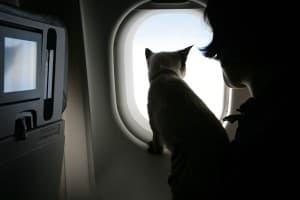 котик в самолете