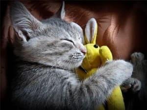 милый котик с игрушкой