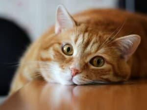 котик валяется на столе