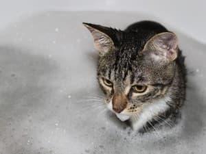 котик в ванной